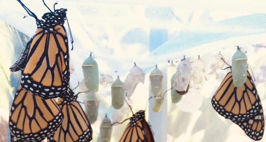 OC Butterfly Farm