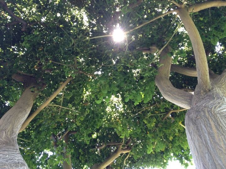 Sunlight through my tree's branches. My tree is gone now. Yet, I have this photo!  Sometimes it can be too late... so don't just dream... act on your dreams!