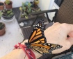 Monarch Butterfly Magic